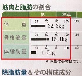 筋肉と脂肪の割合