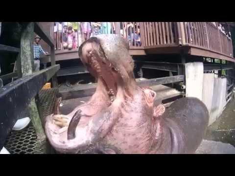 Video3 : カバにスイカをダンクシュート (投稿者:A14改様)