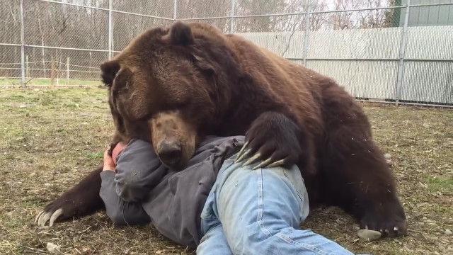 クマみたいな見た目のジムおじさんと、仲良く添い寝するクマのジンボ