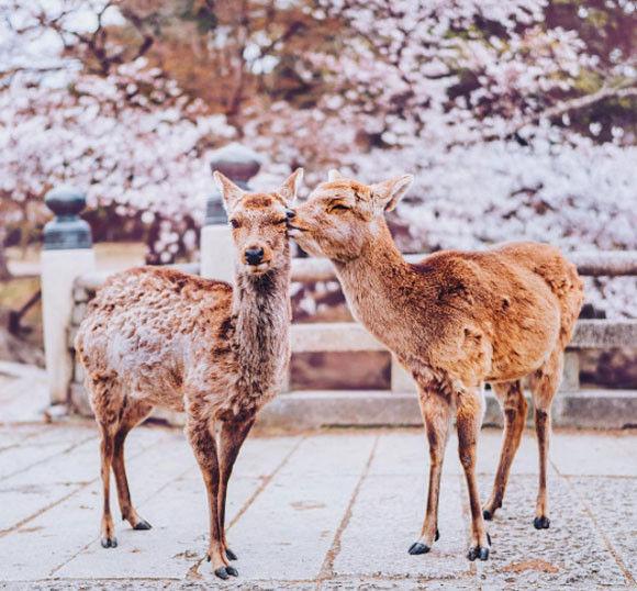 ロシアの写真家が日本にやってきた。ロシア人目線で「日本の春」を撮影していった。すべてが新鮮でただもう美しくて・・・
