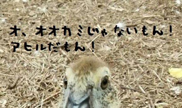 あ...ありのまま 今 起こった事を話すぜ。オオカミを宿したアヒルがいたんだ。とりあえずこれを見てくれ。
