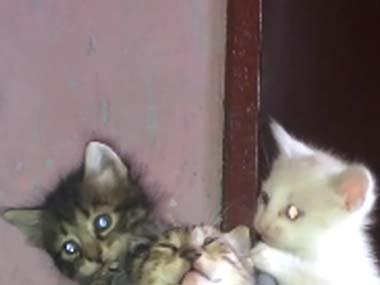 3匹の子ネコが靴の周りで「わちゃわちゃ」遊んでいた → いつの間にかこうなった…