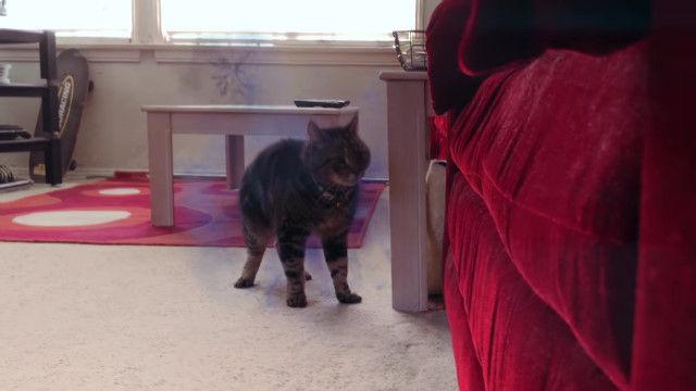 瞬間移動するミュータントパワーを持つ猫を飼うのは大変すぎるショートムービー X-Men: Nightcrawler Cat