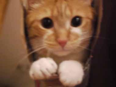 うちのネコが箱に「ぴったり」入って出てこない → 持ち上げて揺らしてみても出てきませんw