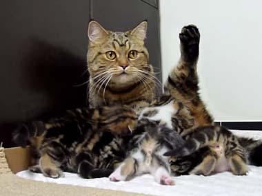子ネコたちが元気に「うにゃうにゃ」遊んでいた。ママ猫「おっぱいの時間だよ~」 → すると・・・