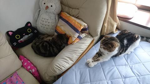 草太さんのベッド・・・