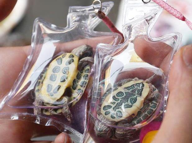 中国での流行り?生きた亀を密封してキーホルダー 食材だけじゃなかった。普段使っているものまで・・・中国産まとめ