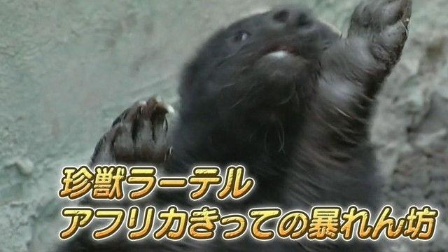 chikyu170225-010