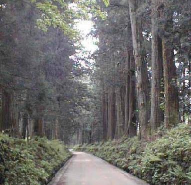 杉並木の危機