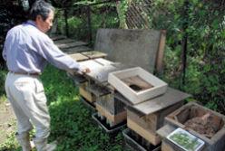 スズメバチを育てている人も