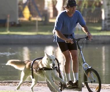 犬力自転車