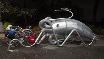 Parking Squid, www.susanrobb.com