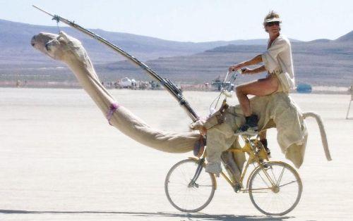 Camel bike