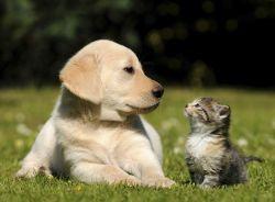 犬より猫?