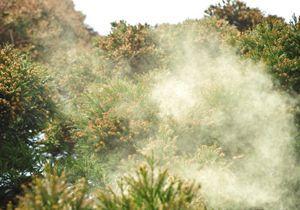 花粉症の原因は車の排気ガス