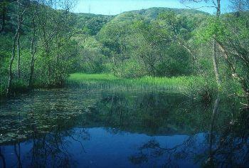 池河内自然環境保全地域