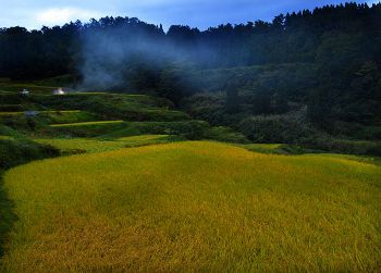 日本一高い米