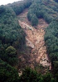 日本の山林の危機