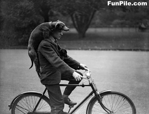 犬ヘルメット