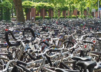 Bait bikes