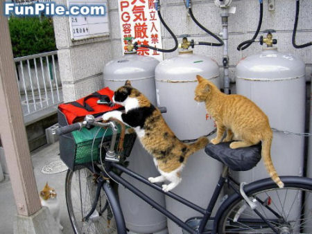 ネコに自転車