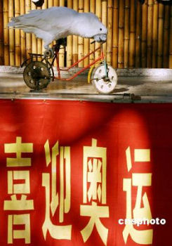 オウムも自転車に