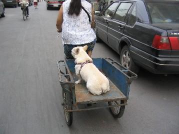 犬用に荷台の後ろが外してある