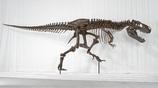 世界の巨大恐竜博