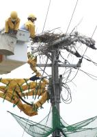 電柱の巣材撤去