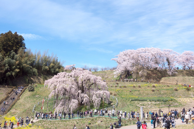 三春町桜めぐり-010