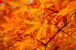 山中湖紅葉まつり-005