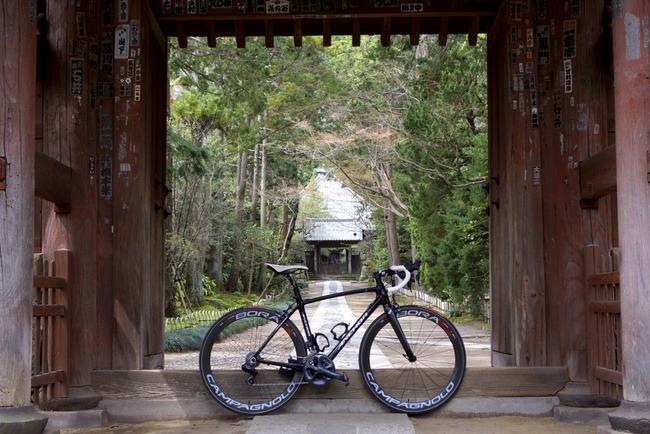 鎌倉桜-010