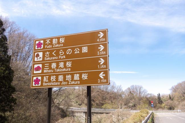 三春町桜めぐり-009