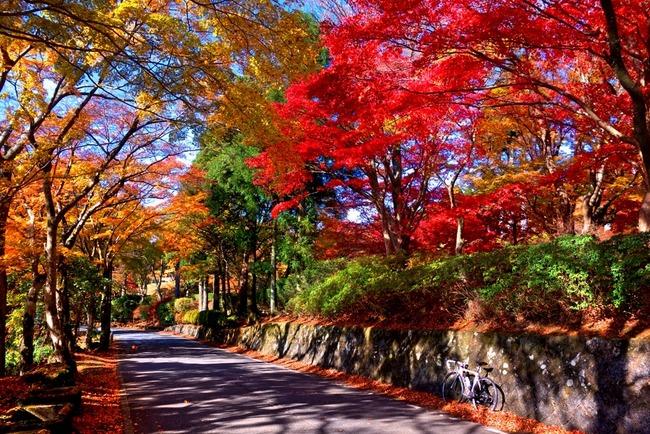 箱根紅葉狩り-007