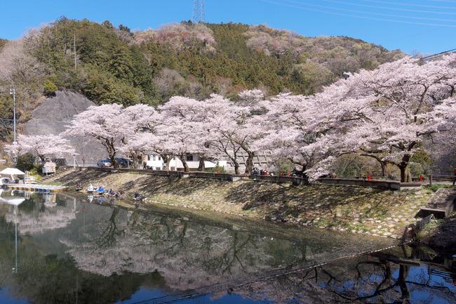 奥武蔵桜めぐり-005
