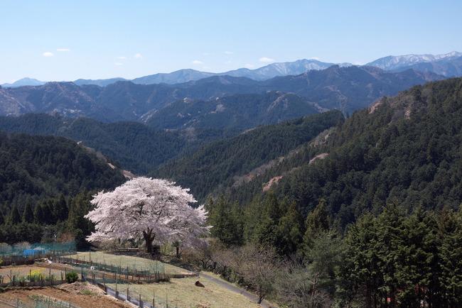 奥武蔵桜めぐり-006