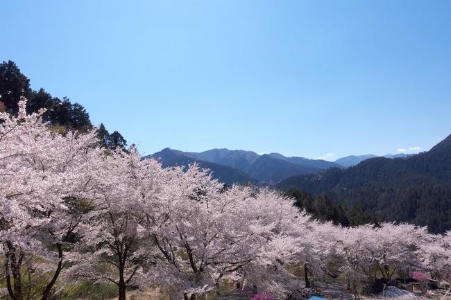 奥武蔵桜めぐり-009
