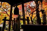 鎌倉紅葉-010