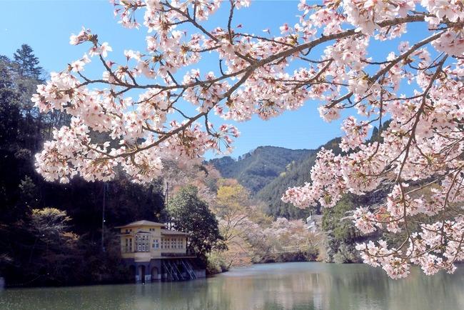 奥武蔵桜めぐり-004