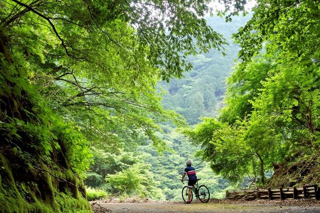 入梅の日の林道三昧