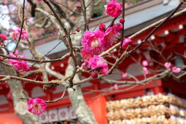 鎌倉冬景色-003