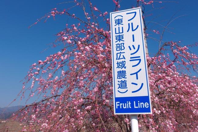 フルーツ&ピーチライン★ポタリング