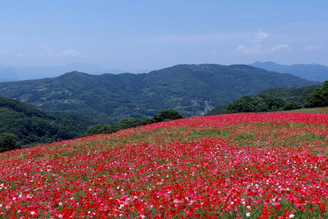 奥武蔵新緑ライド&天空のポピー-005