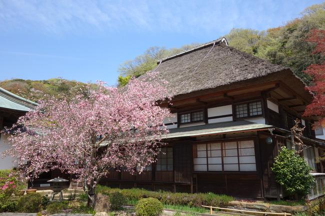 鎌倉ポタ-007