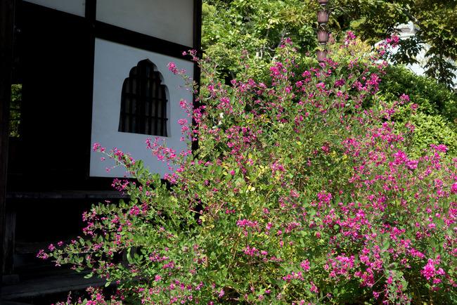 秋涼の鎌倉-001
