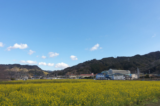 河津桜&西伊豆-002