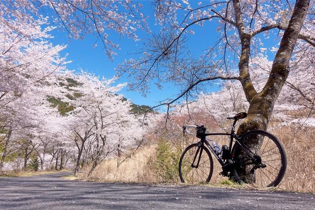 奥武蔵桜めぐり