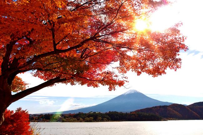 小春日和の富士山-002