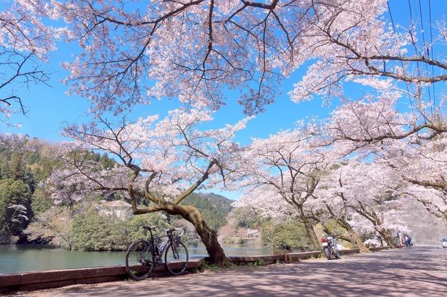 奥武蔵桜めぐり-003
