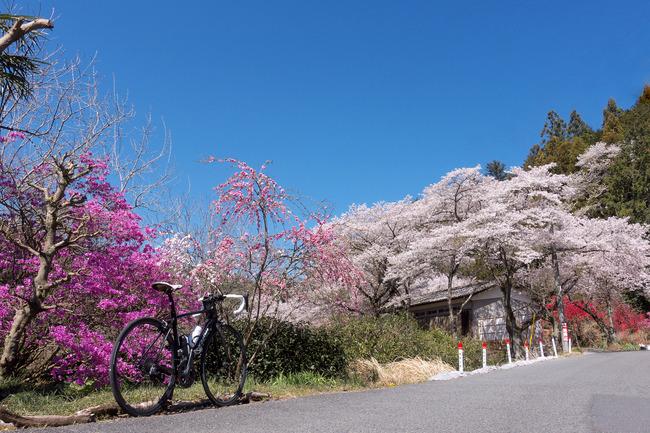 奥武蔵桜めぐり-002